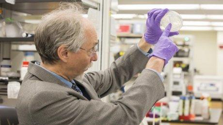 Jef Boeke - Vida Artificial ADN