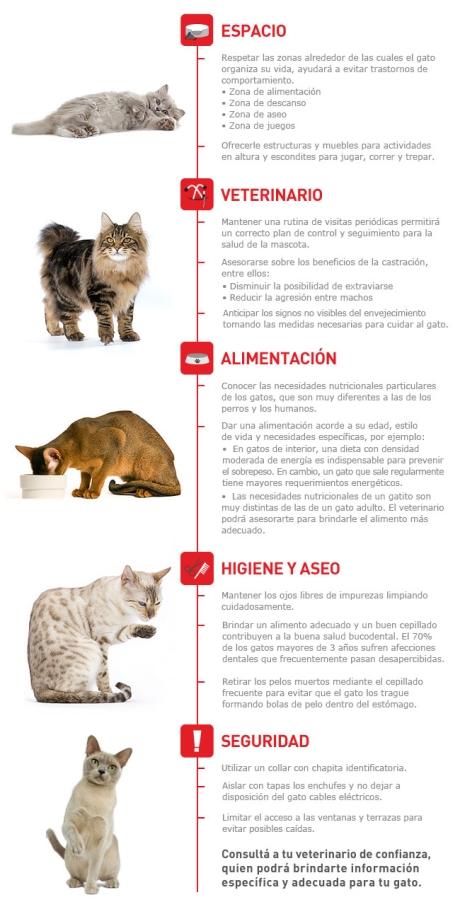 infografia-gato