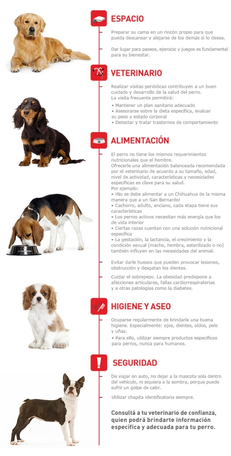 tenencia-responsable-perro